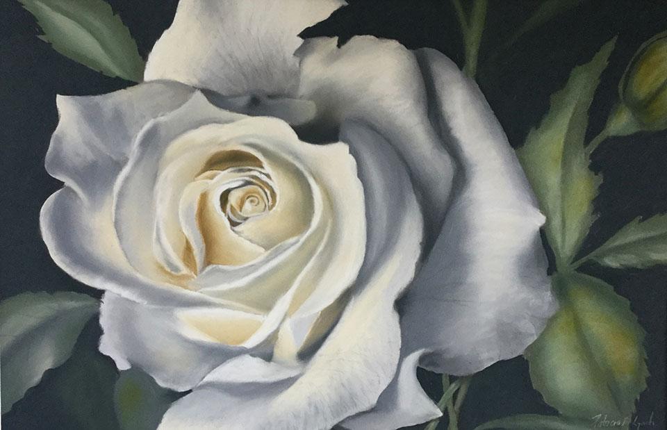 Only-a-Rose-Pat-Lynch